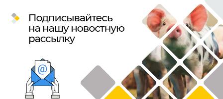 newsletter-movil-ru