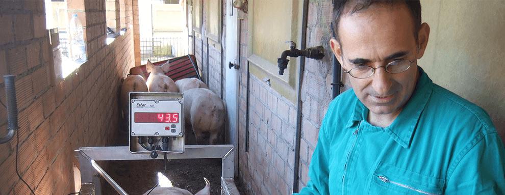 PRRS, la patología endémica con mayor coste económico para las granjas
