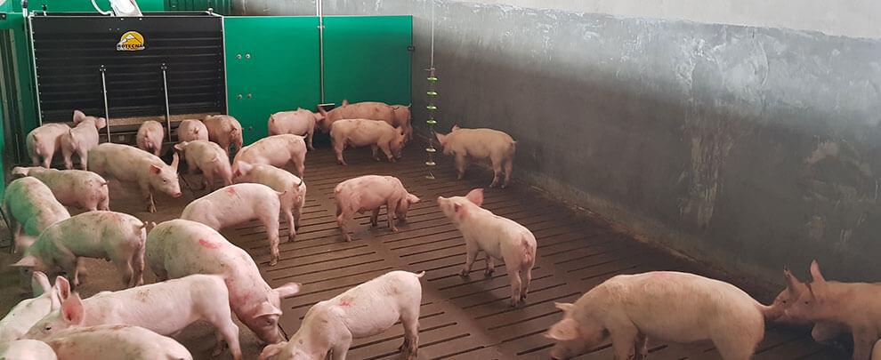 Forecast for Spanish pig production from 2020 to 2030