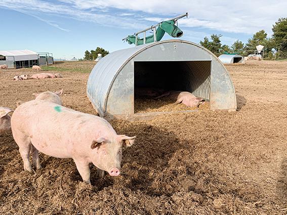 plazas con modelo camping en granja ecologica