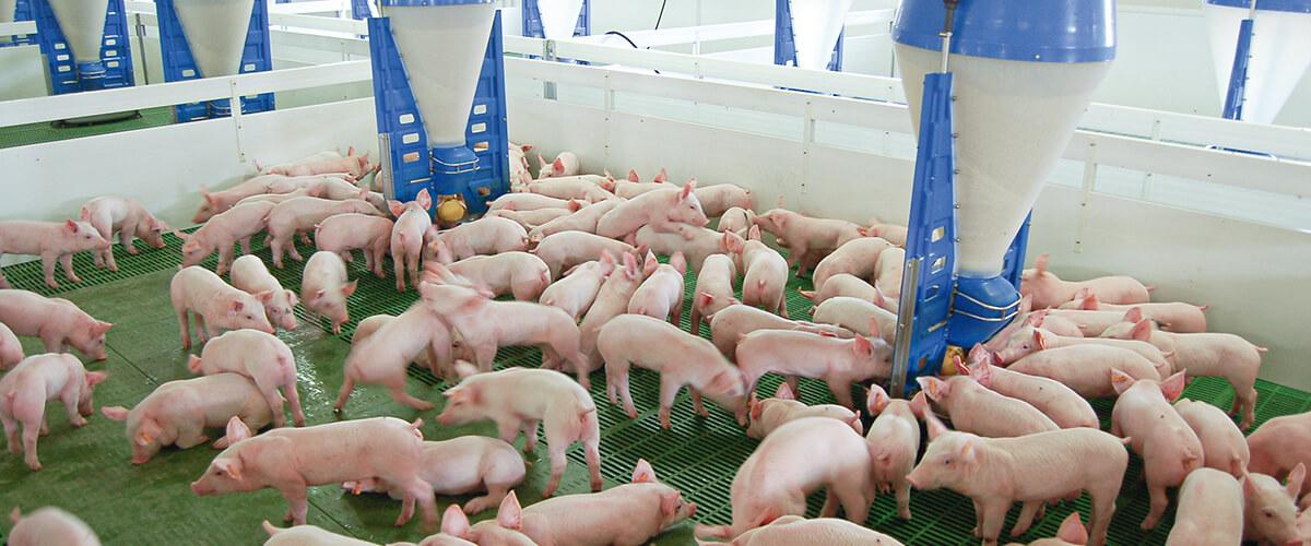 """D. BABOT: """"A les granges podem fer moltes coses, i assequibles, per reduir les nostres emissions""""."""