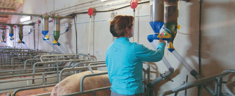Women in pig sector