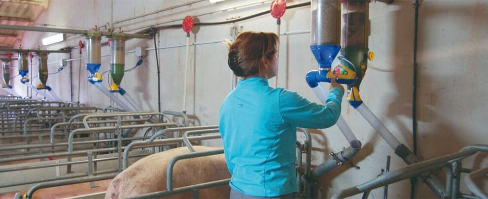 Женщины в отрасли свиноводства