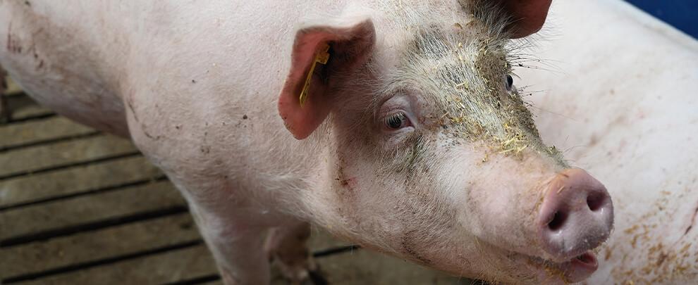 """Natália Majó: """"The single-health approach will improve animal health and welfare"""""""