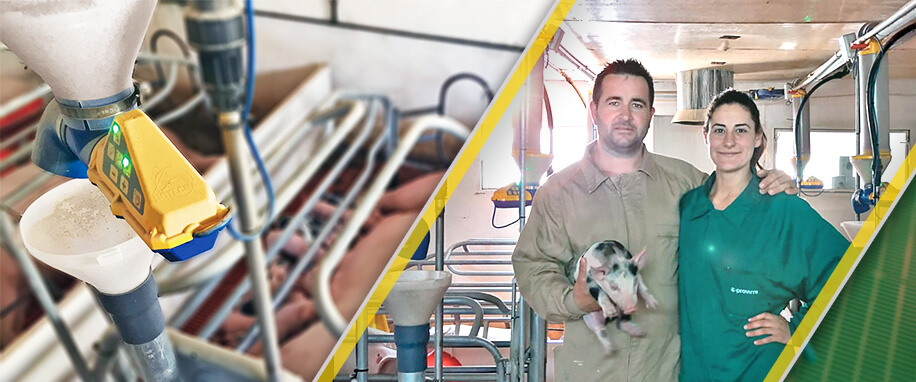 "Dionisio Torres: ""With the dositronic we have recovered the body condition of the sows"""