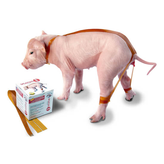 Promotional image of Splaylegstop being used by a piglet