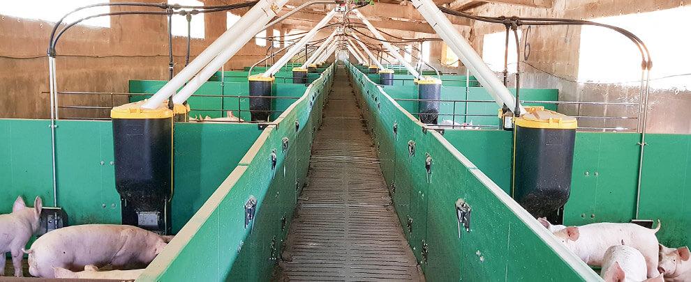 Почему необходимо снижать уровень запылённости на животноводческих фермах?