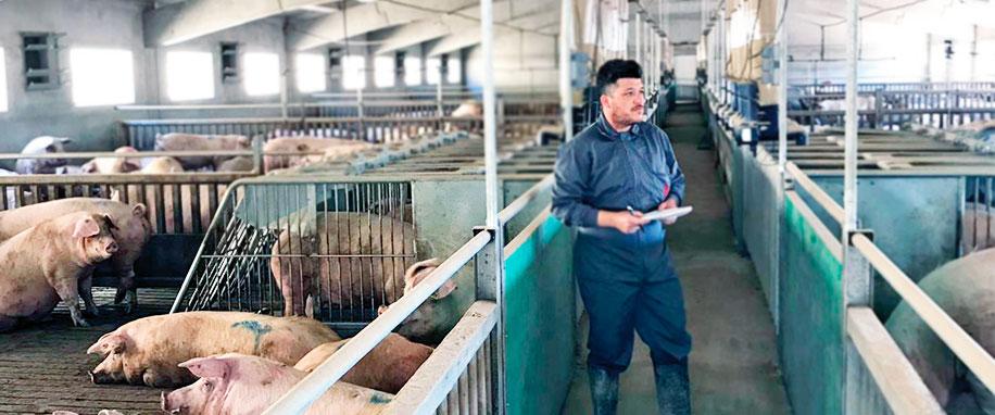 """Fernando Jiménez: """"La potabilització de l'aigua, un vell aliat a ressaltar en la bioseguretat porcina"""""""
