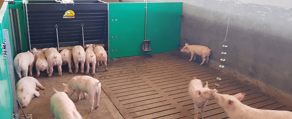 Work routines in handling pigs